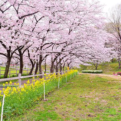 桜と赤ぽっぽ号
